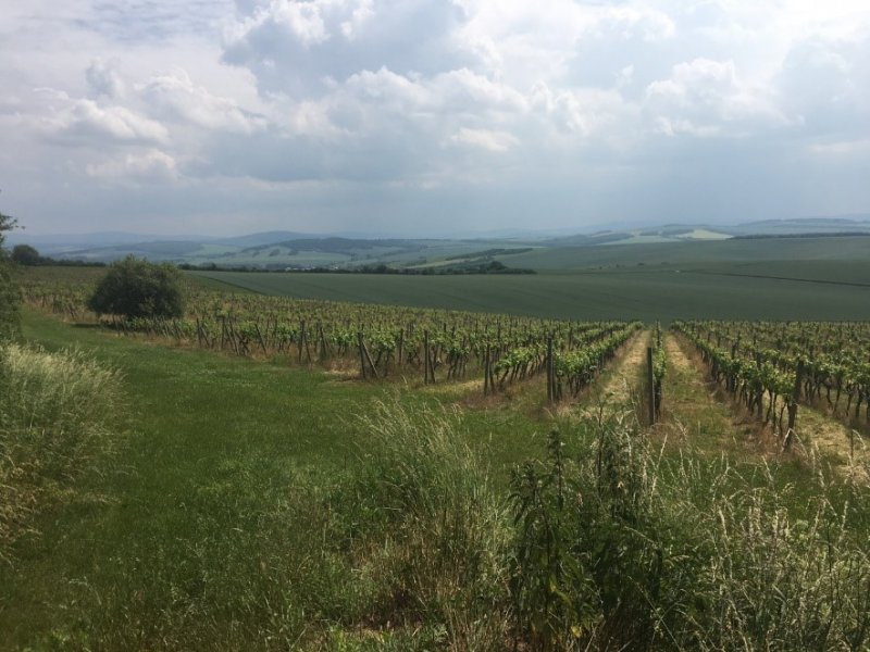 Spacious vineyards and orchards (53 ha) in the cadastral area Kunovice, Hluk sold as a spin-off